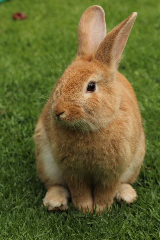 rabbit on a field