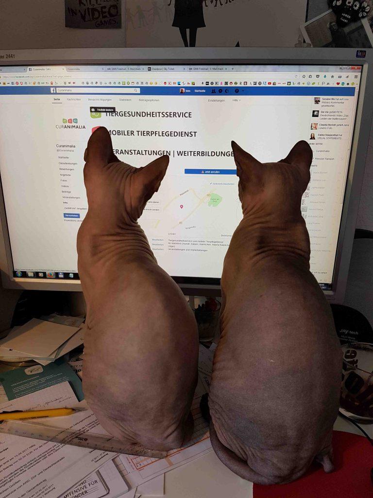 Katzen am PC